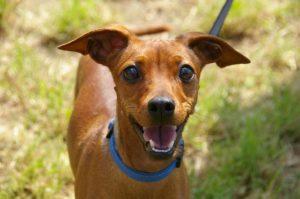 Online Hundetraining Ratgeber
