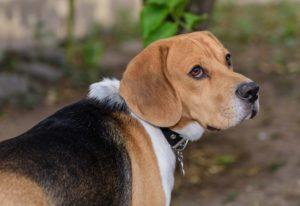 Online Hundetraining Startseite