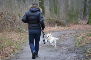Hund Freilauftraining