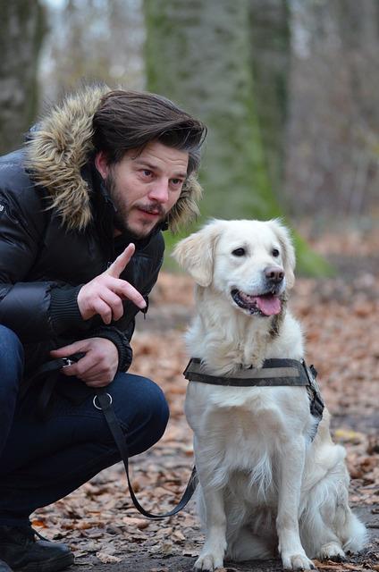 Hundekommandos und Hundebefehle