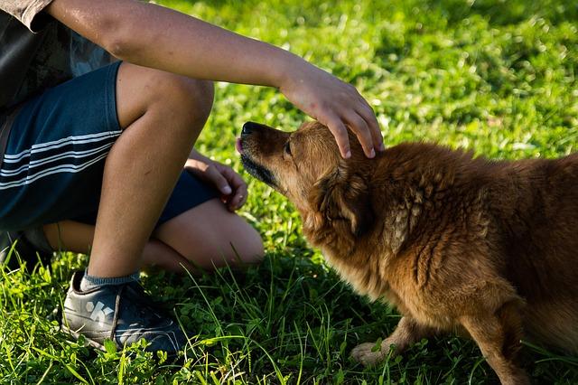 Hundehalter Autorität