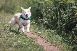 Hund Rückruftraining