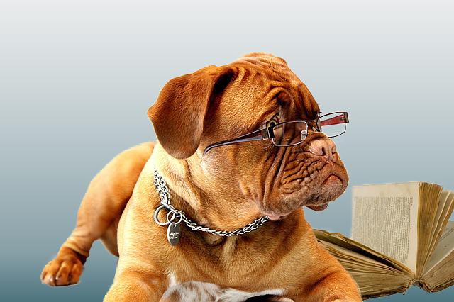 Online Hundeschule Übersicht
