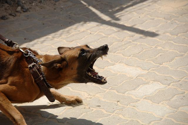 Aggressiver Hund mit Verhaltensauffälligkeiten