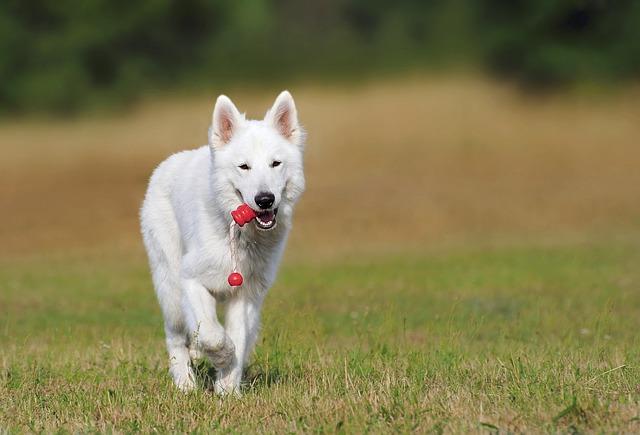Hund fordern und trainieren