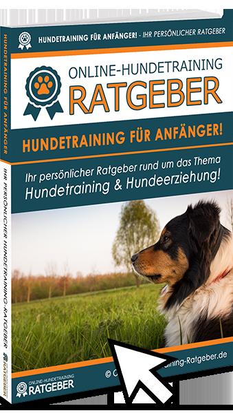 Hundetraining für Anfänger E-Book